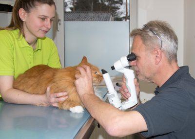Augenuntersuchung Katze